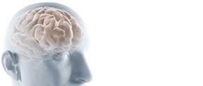 Neuer P.M. Gehirntrainer