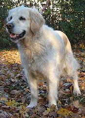 Luxus für Hunde - Eitelkeit der Besitzer?
